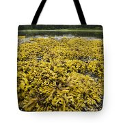 Rock Weed Fucus Gardneri At Low Tide Tote Bag
