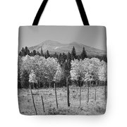 Rocky Mountain High Country Autumn Fall Foliage Scenic View Bw Tote Bag