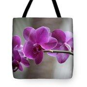 Romantic Purple Orchids Tote Bag