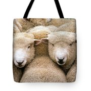 Romney Sheep Tote Bag