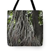 Roots From A Large Tree Inside Jallianwala Bagh Tote Bag
