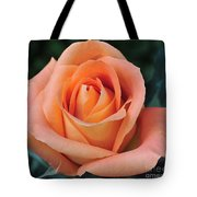 Rose 33 Tote Bag