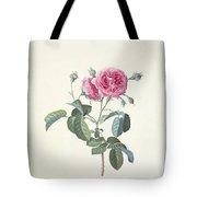 Rose Dutch Hundred Leaved Rose Tote Bag