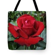 Rose Rosa Sp Ingrid Bergman Variety Tote Bag