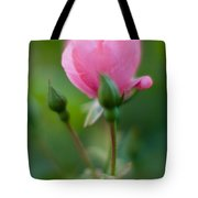 Rose With Pink Glow Tote Bag