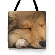 Rough Collie Pup Tote Bag