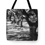 Row Of Oaks - Black And White Tote Bag