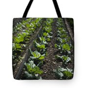 Rows Of Cabbage Tote Bag
