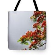 Royal Poinciana Tree Tote Bag