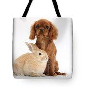 Ruby Cavalier King Charles Spaniel Pup Tote Bag