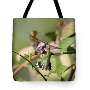 Ruby-throated Hummingbird - An Altercation Tote Bag