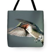Ruby-throated Hummingbird - Hover Tote Bag