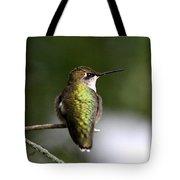 Ruby-throated Hummingbird - Hummingbird - Content Tote Bag