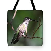 Ruby-throated Hummingbird - Hanging Low Tote Bag