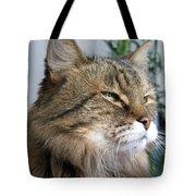 Runcius- My King Kitty Enjoying The Sunshine Tote Bag