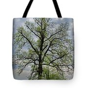 Rural Trees I Tote Bag