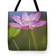 Sacred Lotus Nelumbo Nucifera Flower Tote Bag