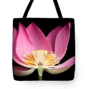 Sacred Lotus Nelumbo Nucifera Tote Bag
