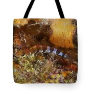Saddled Blenny, Bonaire, Caribbean Tote Bag