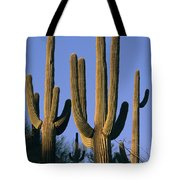 Saguaro Cacti In Desert Landscape Tote Bag