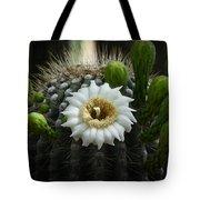 Saguaro Cactus Blooms  Tote Bag