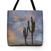 Saguaro Carnegiea Gigantea Cacti, Cabo Tote Bag