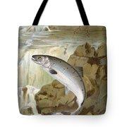 Salmon, C1900 Tote Bag