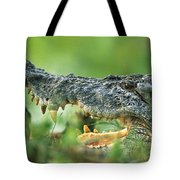 Saltwater Crocodile Crocodylus Porosus Tote Bag by Cyril Ruoso