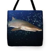 Sand Tiger Shark Off The Coast Of North Tote Bag
