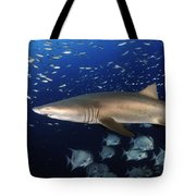 Sand Tiger Shark Swimming In Blue Water Tote Bag