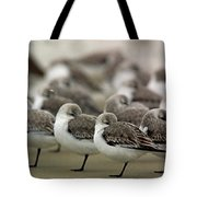 Sanderlings Try To Keep Warm At Corporation Beach In Dennis On C Tote Bag
