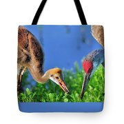 Sandhill Cranes Having Breakfast Tote Bag