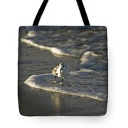 Sandpiper On Beach Tote Bag