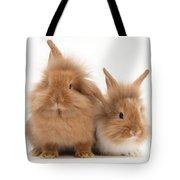 Sandy Lionhead Rabbits Tote Bag