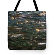 Sardines Anyone Tote Bag