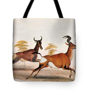 Sassaby And Hartebeest, Tote Bag