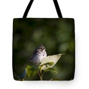 Savannah Sparrow With Spiders Tote Bag