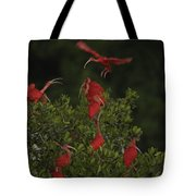 Scarlet Ibises Roost In A Red Mangrove Tote Bag