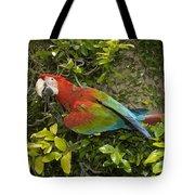 Scarlet Macaw Ara Macao Adult Perching Tote Bag