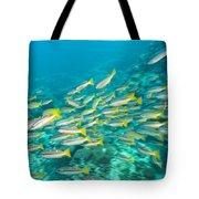 Schooling Bigeye Snappers Tote Bag