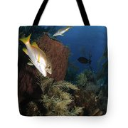 Schoolmaster Snapper, Belize Tote Bag