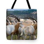 Scimitar-horned Oryx Tote Bag