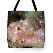 Scorpionfish, Indonesia Tote Bag