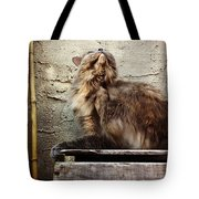 Scritch Scratch Tote Bag by Katie Cupcakes