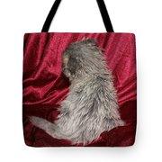 Scruffy Fold 2011 1 Tote Bag