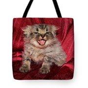 Scruffy Fold 2011 2 Tote Bag