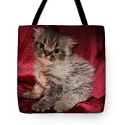 Scruffy Fold 2011 3 Tote Bag
