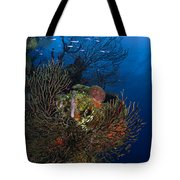 Sea Fan Seascape, Belize Tote Bag