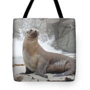 Sea Lion Monterey Tote Bag