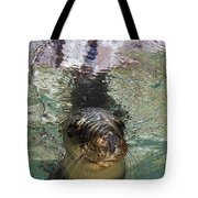 Sea Lion Portrait, Los Islotes, La Paz Tote Bag by Todd Winner